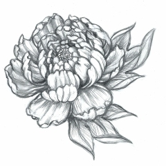 realistic-crysanthemum-flower-tattoo-design